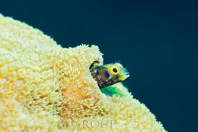 Biodiversity Group, DSC01191
