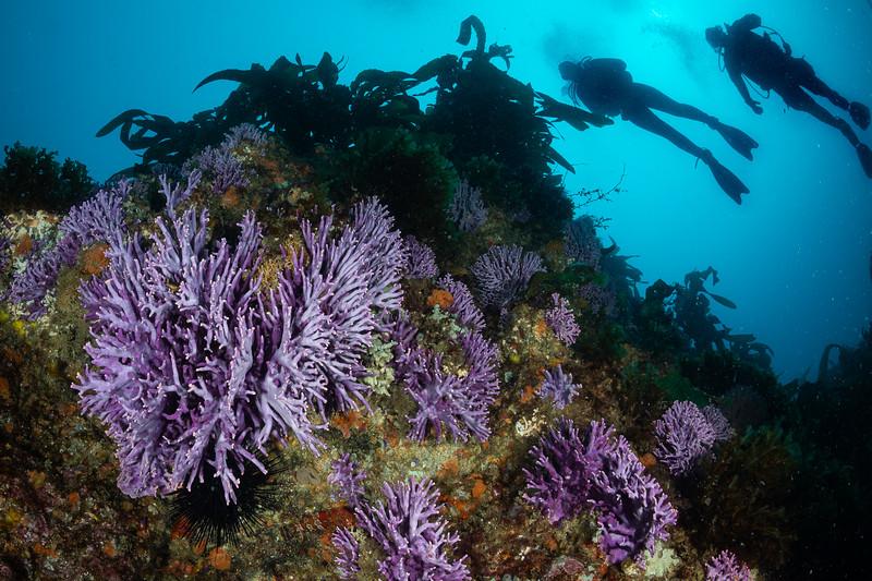 Divers explore Farnsworth Banks, Catalina Island