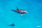 Dolphin_D711233