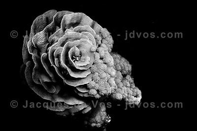 Underwater Black & White