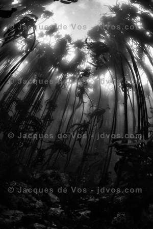 Kelp Underwater Seascape