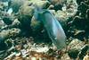 Bonaire 0708 - 08
