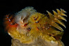 Multicolor Christmas Tree Worms