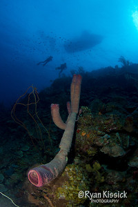 Divers and sponge