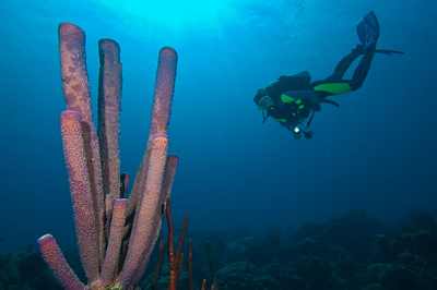 Diver with Purple tube sponge at Karpata