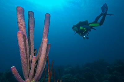 Diver with Purple tube sponge at Karpata