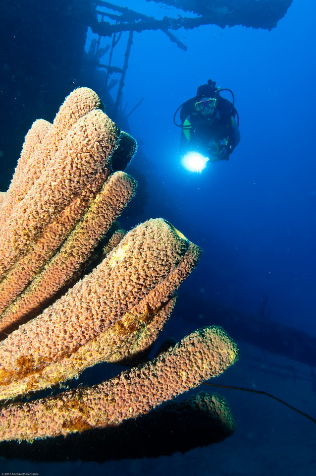 Tube sponges off the stern of the Hilma Hooker