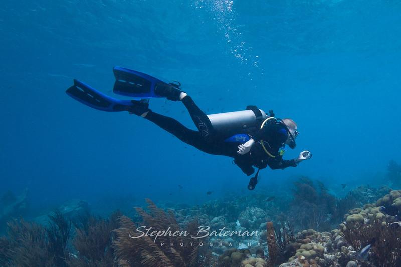 Diver, Tim
