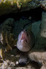 Moray - Bari Reef