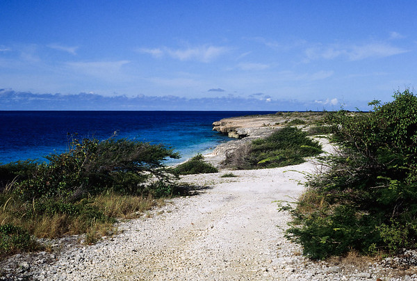Bonaire has a rugged ironshore coastline and an extemely arid climate.