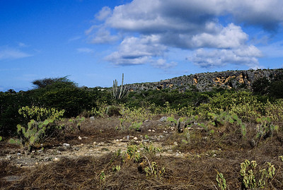 The arid countryside of Bonaire is populated largely by cactus and other hardy shrubs.