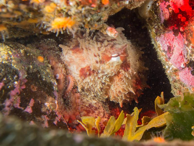 Octopus's Garden _EM50148