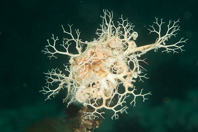Basket Star_DSC1058