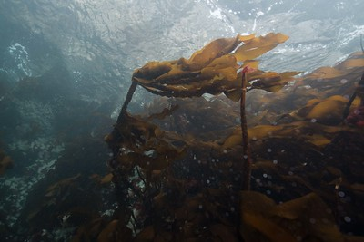 Kelp and Water Surface_DSC2527