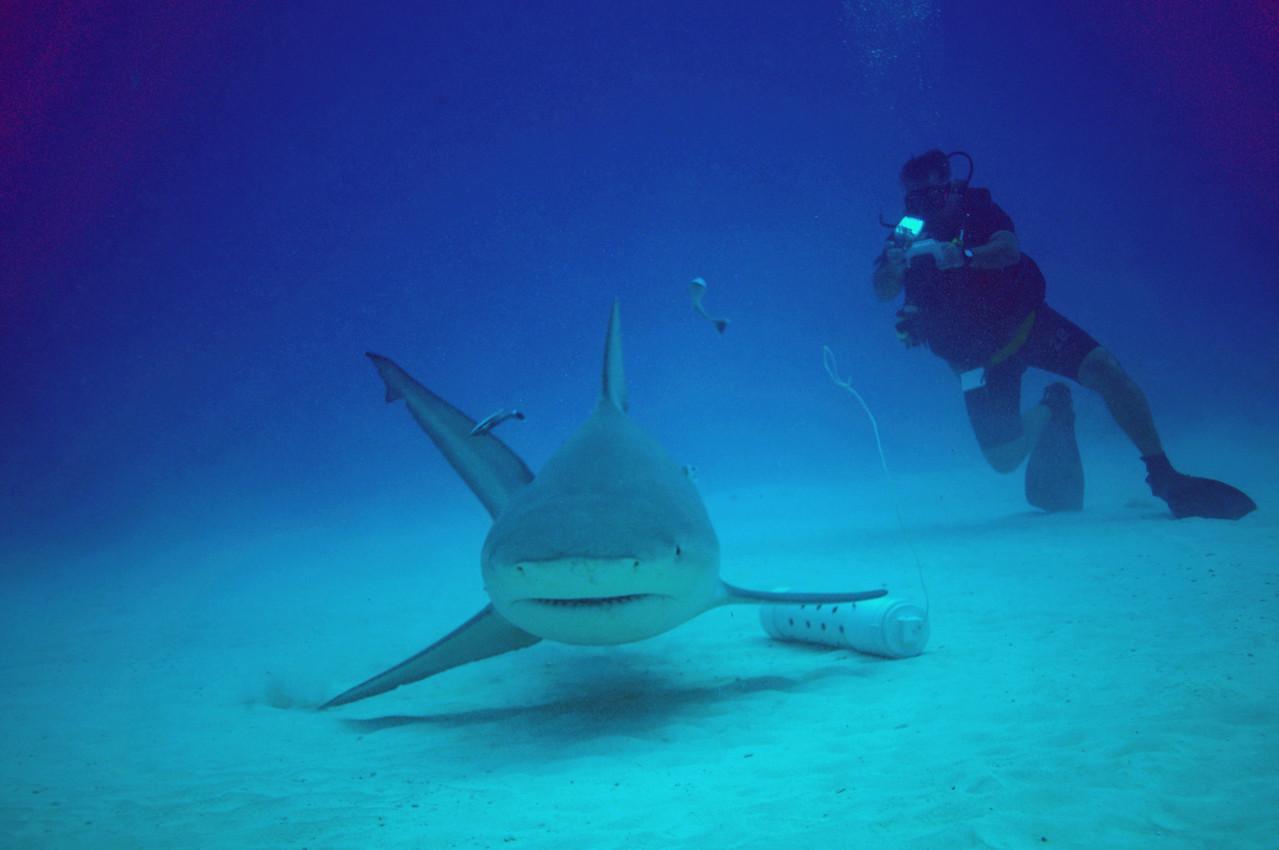 Klaus shooting some video of Bull Shark - November 2012