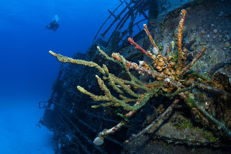 diver(s), LCBR, Little Cayman, M.V. Keith Tibbetts