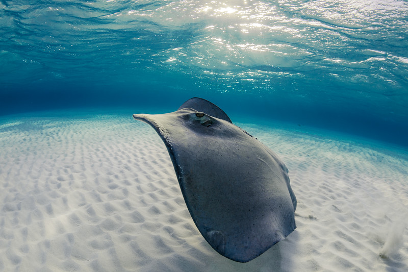 Grand Cayman, Stingray City