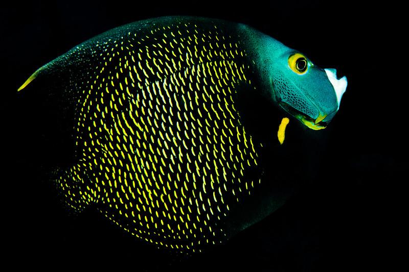 Calabas Reef