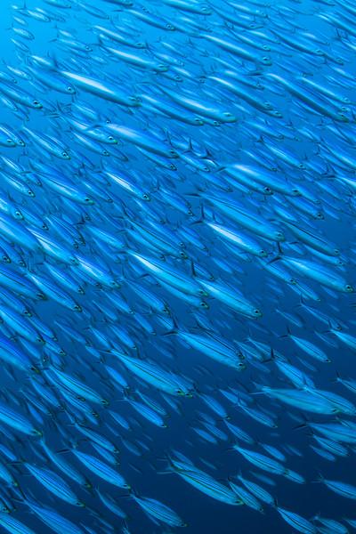 Bonaire, Digital Shootout, Punt Vierkant, Salt City, School of Fish