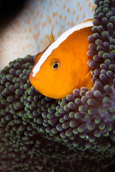 House Reef, Indonesia, Wakatobi