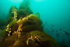 Canon 24-70mm, Channel Islands, Cold Water, Kelp, Ship Rock
