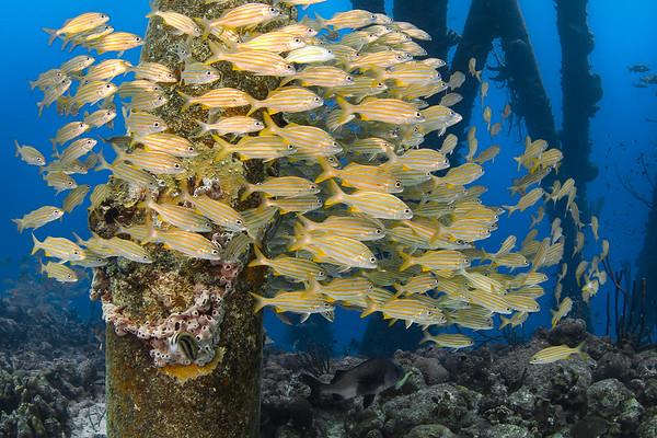 Buy Underwater Prints