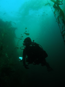 Diver in Landing Cove, Anacapa Island, CA