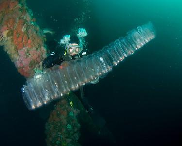 California Oil Rig Diving