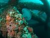 Jellyfish drifting through oil rig