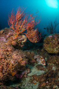 Santa Barabara Island Reef Sceen, California
