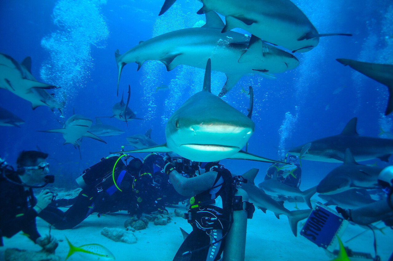 Caribbean Reef Sharks, Bahamas - February 2011