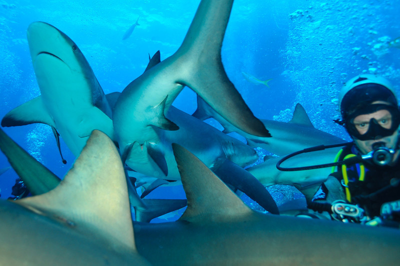 Sharks literally bumping me as I shoot!  Bahamas - February 2011