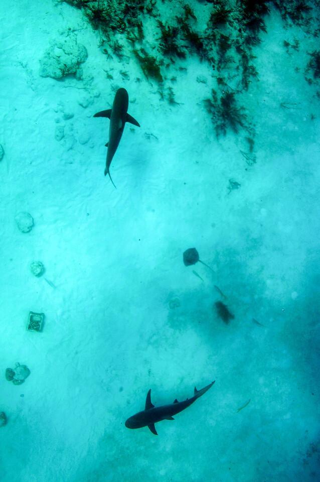 Looking down at Shark Arena, Bahamas - February 2011