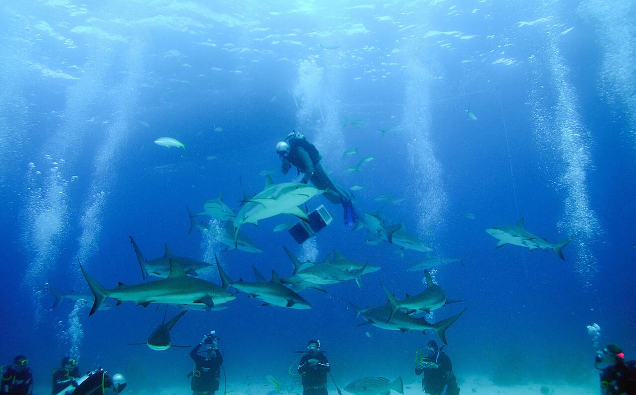 Descending Shark Feeder, Bahamas - February 2011