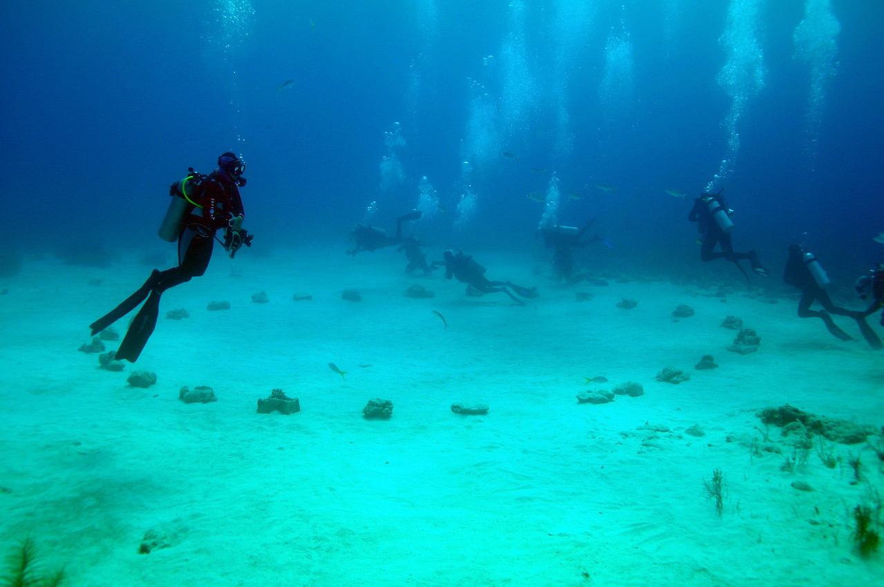 Divers getting positioned at Shark Arena, Bahamas - February 2011