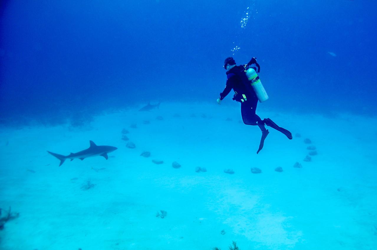Approaching Shark Arena, Bahamas - February 2011