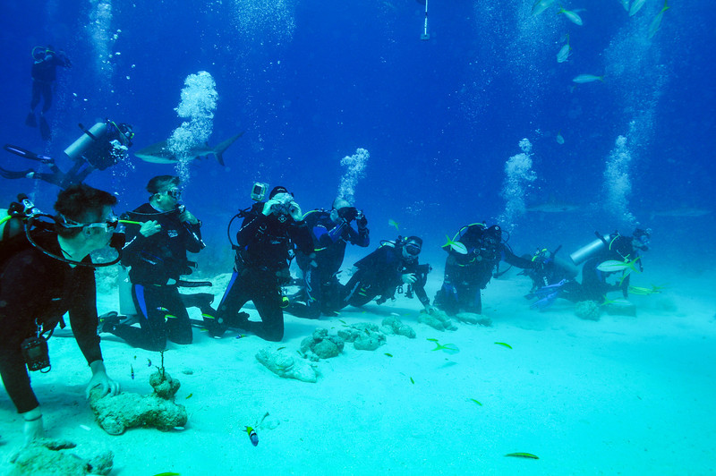 Divers ready for the show at Shark Arena, Bahamas - February 2011