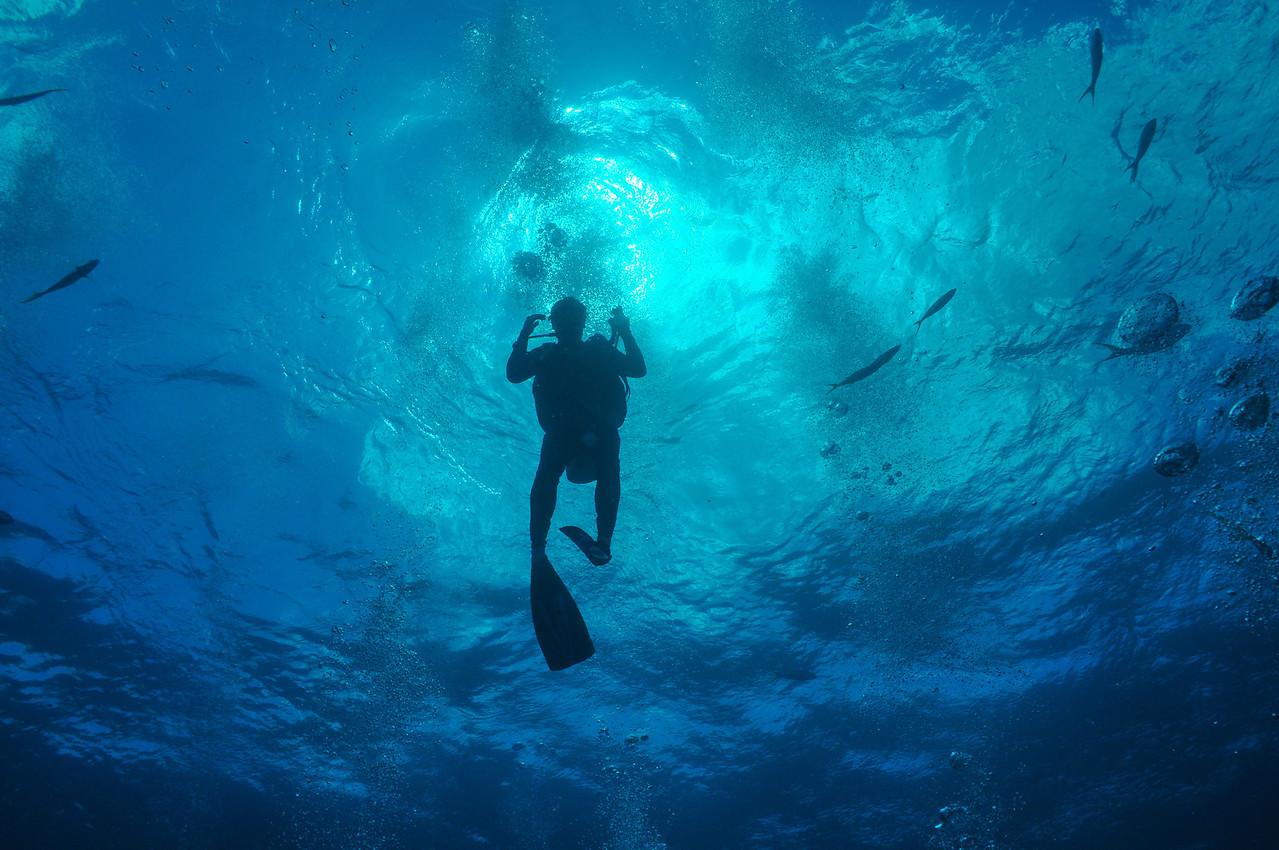 Shark Bait!  Bahamas - February 2011