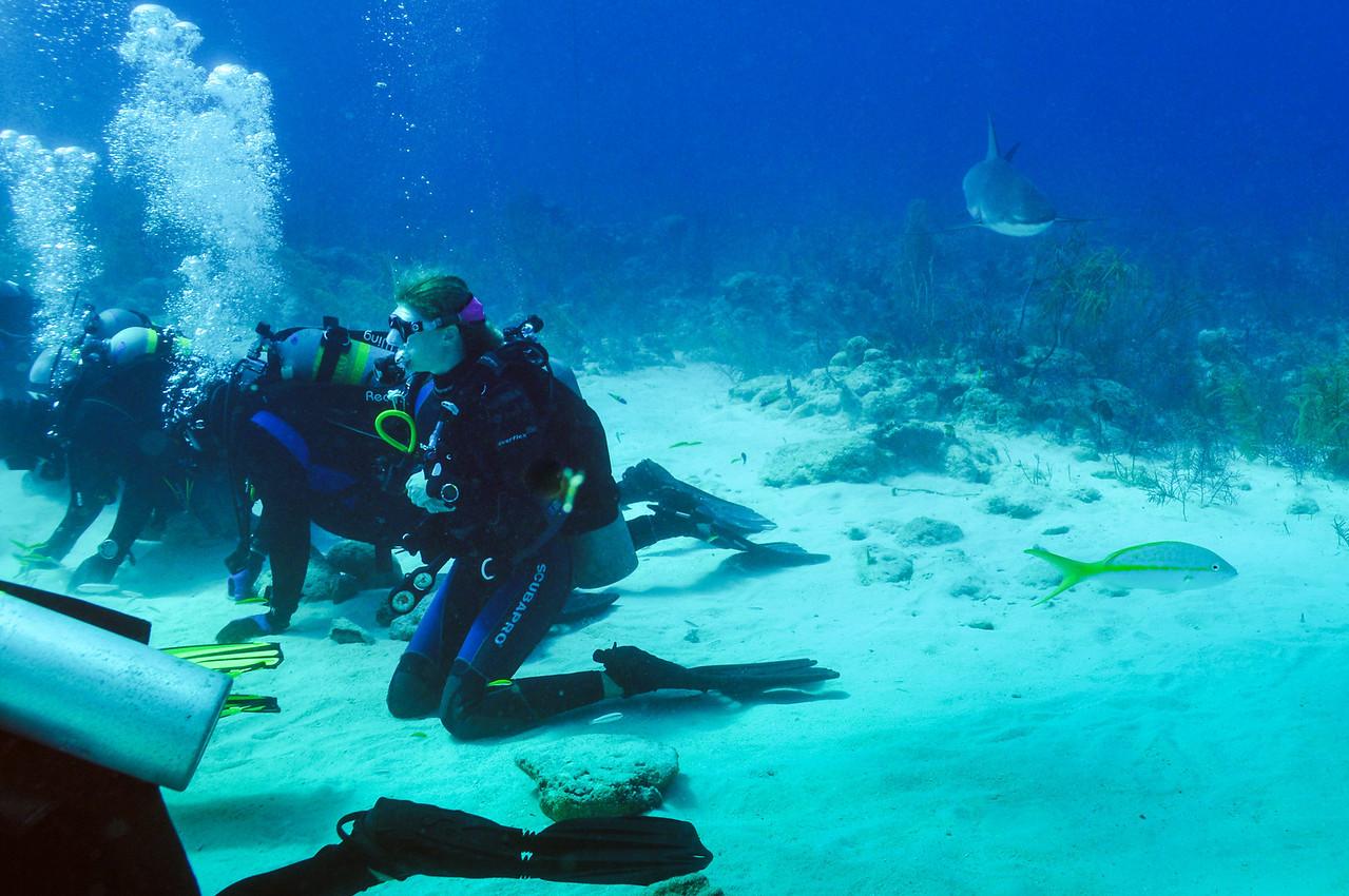 Caribbean Reef Shark approaching from the rear, Bahamas - February 2011