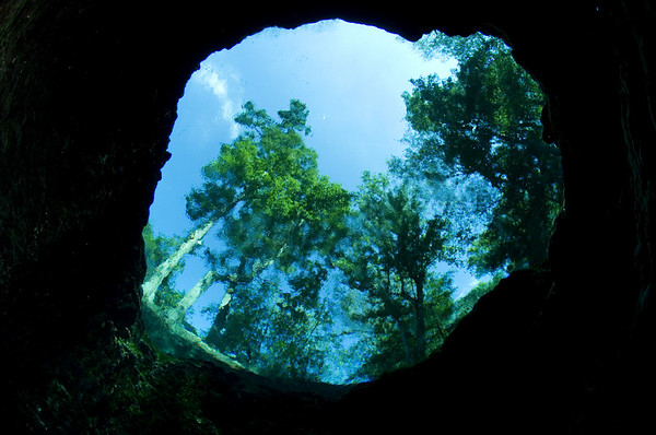 Peering out from inside planet earth, a cave diver views the world above with a new set of eyes. Devil's Eye Spring, Ginnie Springs, Florida.