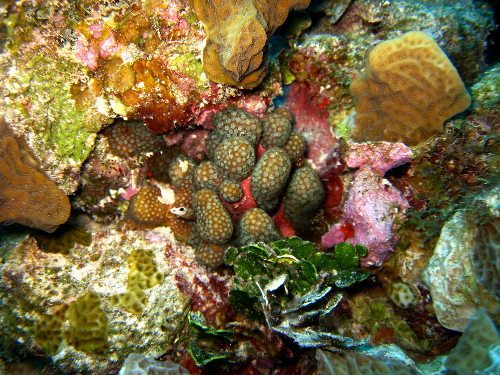 Different corals, competing for space.  I just liked all of the colors in this one area.