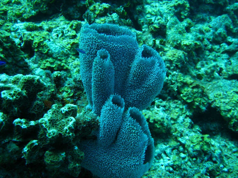 Purple vase sponges