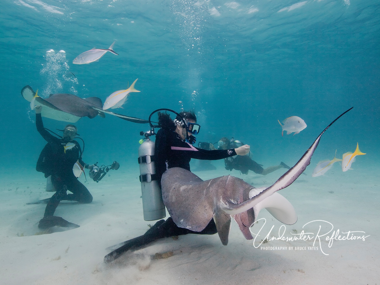 Rick and Traci wrangle a couple of big female stingrays.