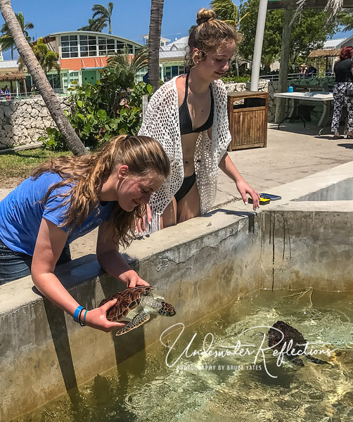 Once baby turtles reach a certain age/size, a few are put in handling pools.