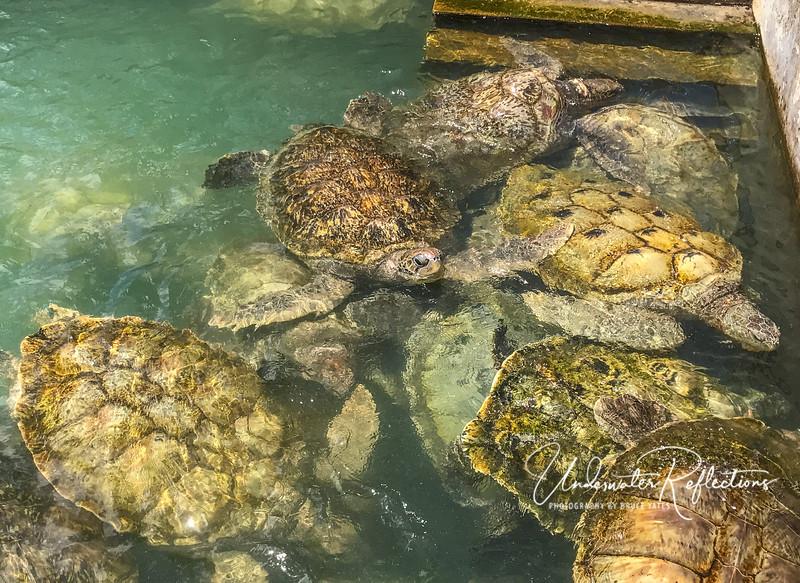 Whole lotta turtles!