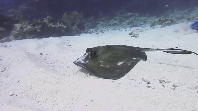 G Cayman-4333