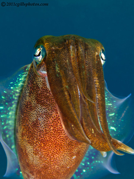 Squid-2CA031541-Edit