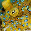 Flounder-P2184501-Edit