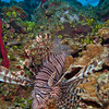 Lionfish-reef-WA-CA074763-Edit