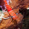 NightShrimp-CA097668-Edit